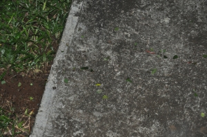 across the sidewalk