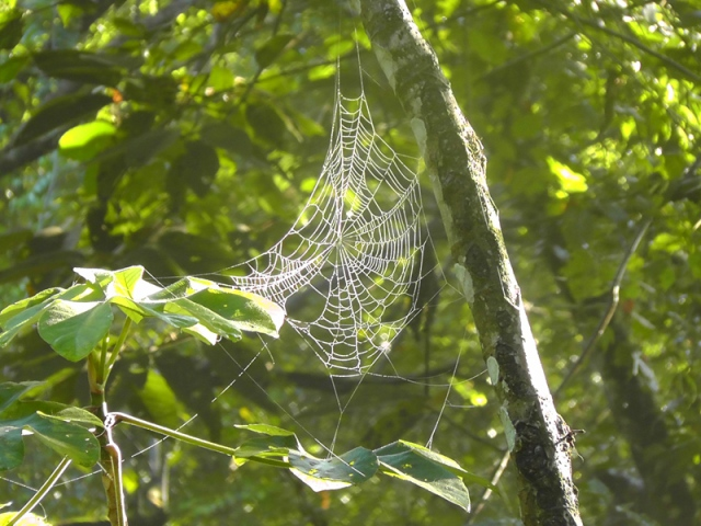 A spider's web covered with dew in the woods, caught in the first rays of the morning sunlight