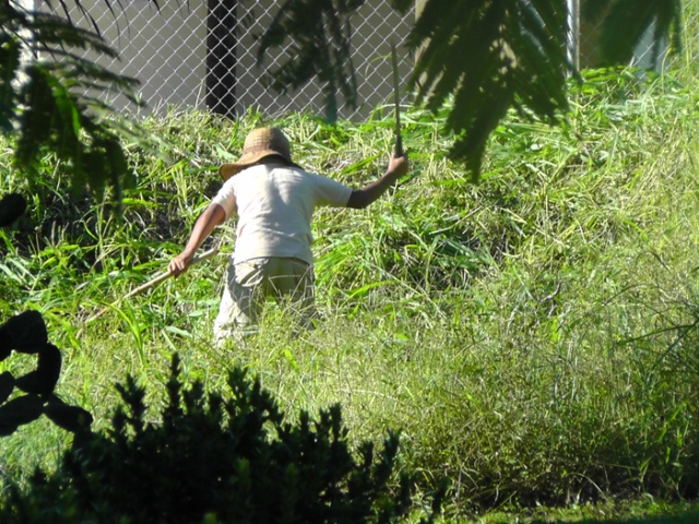 This is a very common sight, man with machete. When the grass gets very high, this is how it is cut down. There is a vacant lot two doors down from us, and this guy was trimming it this morning.