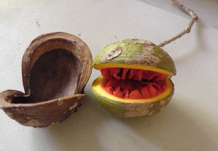 I found what looked like a seed pod that had opened to reveal a green nut. I put it on my desk, and the next day the green nut opened to show me this bright red center!