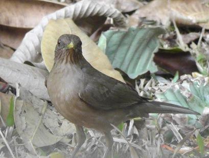 bird3s