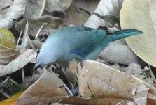 bluebird1s