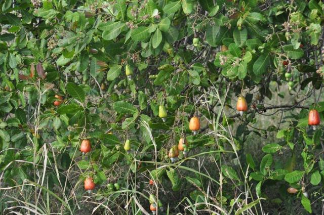 Definitely red fruit.