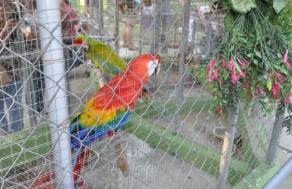 There were many birds, these being the most colorful.