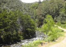 Bambito - the resort overlooked this beautiful stream surrounded by tall pines.