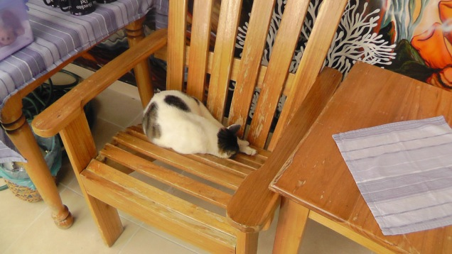 The cat often claims one of the chairs.