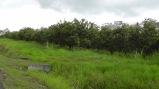 Orange groves, for miles!