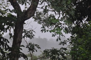 Rain makes the distant trees look partly hidden in the mist.
