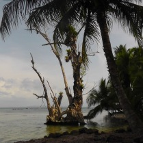 There were so many interesting spots along the beach, like these old trees covered with bromeliads.