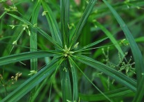 grass pattern 1