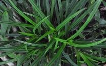 grass pattern 5