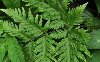 a fern with patterns of leaves, with the pattern further reflected in the sections of leaves