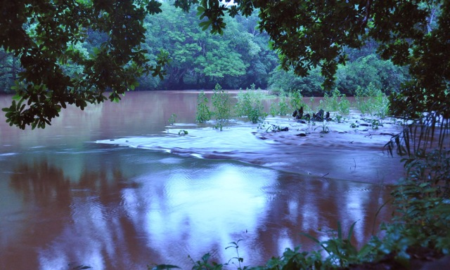Panama, River David, muddy after the rains.