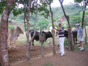 Roberto and Joel with the cows