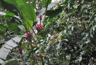 Flowers at Sitio Barriles, Volcan, Chiriqui, Panama