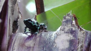 This beautiful frog was very small so it was hard to get clear photos.