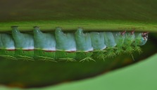 Another view of the caterpillar. It looks like it would be as soft as a pillow.