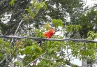 The macaw in the tree was gorgeous.