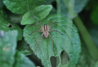 Pretty garden spider