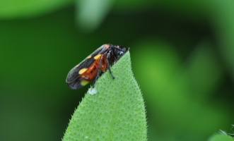 Another of the tiny bugs.