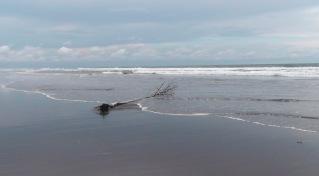 Playa La Barqueta 12