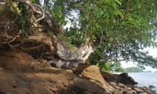 There are gnarled trees clinging to the rocks.