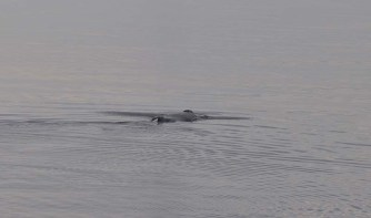 Our first real humpback whale sighting!