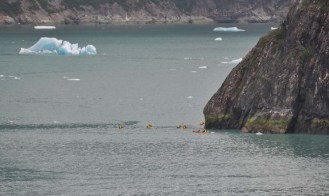 Kayaks going to visit the glacier. (that water is COLD! They'd better not fall out)