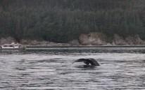 Alaska817A3