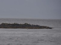If you look very closely, you can see two harbor seals on the right at the end of the little island.