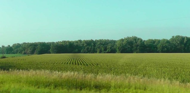 Corn fields. There is an amazing amount of corn grown in the area!