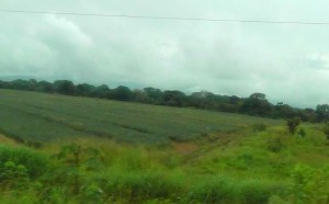 The bus takes you through a lot of beautiful Panamanian countryside. This is one of the many fields of pineapples that we passed. I don't have the best luck taking photos from a moving bus so please excuse the picture quality.