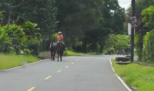 This guy was riding his horse along the road and leading another one.