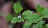 The smoothness of a water droplet on a leaf with the implied textures of the reflections in the water.