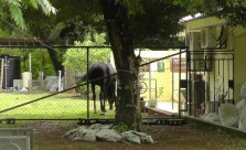 This very nice house had a beautiful horse in the side yard the other day.
