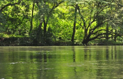 The river is one of my favorite places! Right now at the height of rainy season it is incredibly green. The sun shining through the green leaves and reflecting on the water yesterday was so beautiful. The green here makes me feel very peaceful and happy.
