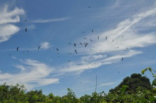 Our boat captain told us the frigate birds are nesting now, which is why there were so many flying overhead.