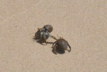 There were lots of little hermit crabs everywhere.