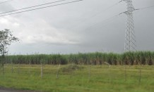 As we headed south from Santiago the rain started to clear. I believe this is a field of sugar cane.