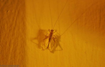 A tiny bug on the wall last night.