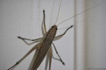 Of course there will be bugs too! We found this one on the back door when we came home.