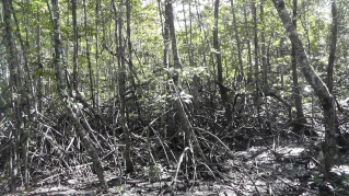 We passed this interesting swampy area.