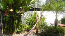 The hammock in the side yard beside some more beautiful heliconias.