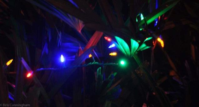 A few of our lights in a bush.