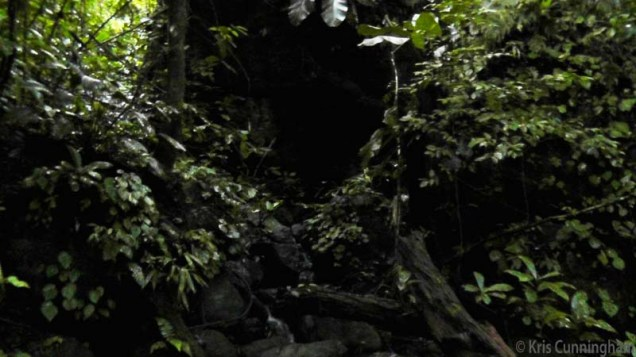 An incredibly large tree had fallen and this was the underside of the stump, hard to photograph in this dark area of jungle.