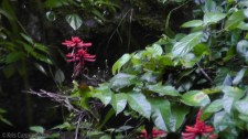 We happened across these pretty red flowers near the river.