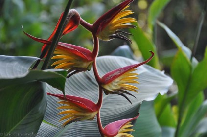 The heliconias were really beautiful.