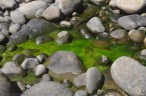 This pool of water in the rocks was full of bright green algae.