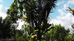Every tree is covered with bromiliads and other plants.
