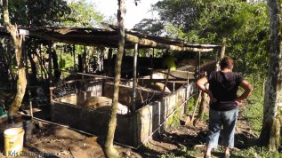The pig enclosures.
